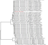 Tree using all BOLD data
