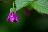 McDowell Falls area flower 1
