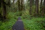 Oregon path