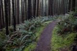Cooks Ridge Trail