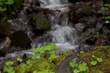 Cooks Ridge Trail cloverleafs