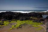 Oregon coast 8