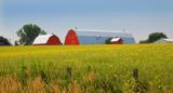 Rural Splendor