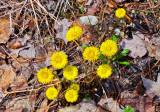 Unknown Yellow Wild Flower