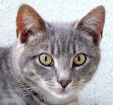 3.25.12, Kitty, Canon G12.JPG