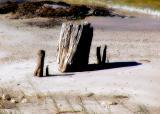 11 16 05 Stumps, SMR, olyuz.jpg