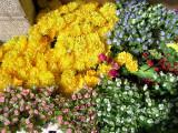007 Flowers in Al-Salt.jpg