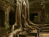 Ta Prohm PM.jpg
