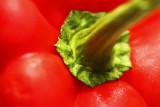 Paprika 02 web.jpg