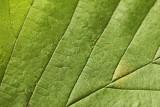 Leaf 01 web.jpg