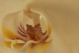 Inside a flower 01 web.jpg