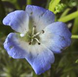 Blue flower web.jpg