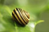 Snail 1 web.jpg