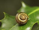 Snail 2 web.jpg
