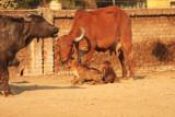 Patan newborns.jpg