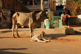 Patan street scene.jpg