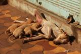 Ahmedabad puppies.jpg