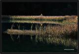 Rhino Lake Morning