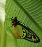 SGP_Butterfly_1113s.jpg