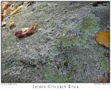 Lichen Covered Rock