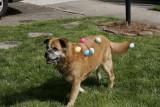 Roxanne, Easter at Nanny Kats
