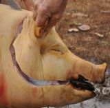 Pig killing in Hungary