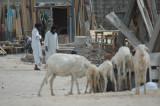 10_Mauritania_Nouadhibou042.JPG