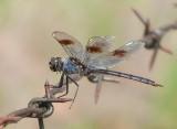 Bugs of Texas
