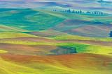 Palouse Landscapes