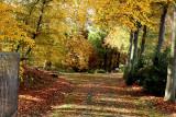 Heverlee Bos in Autumn