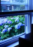 outside my window