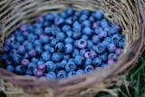time for blueberries