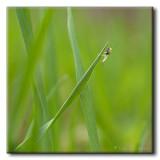 Insecte sur Herbe
