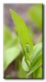 Insecte sur Plante