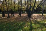 Arboretum Volčji potok (sence2 copy.jpg