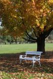 Autumn in Arboretum Volèji potok (osamljena copy.jpg)