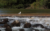 River Sava (IMG_0050ok.jpg)