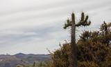 Canjon de Colcas - Arechipa - Peru (IMG_4392ok.jpg)
