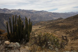 Canjon de Colcas - Arechipa - Peru (IMG_4402ok.jpg)