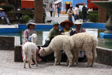 Chidren and alpacas - Peru (IMG_4445ok.jpg)