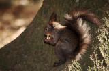 Squirrel (IMG_5161m.jpg)