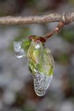 icicle (IMG_7675m.jpg)