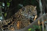 brazil_2012_pantanal