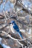 The Bird Again