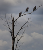 Three on a Tree