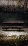 moonlit picnic