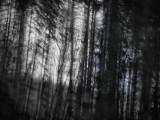 trees in motion