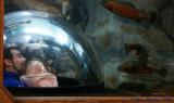 I_See_Fish.jpg