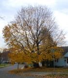 Almost bare tree