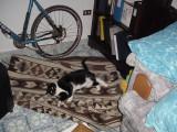 Yoshi on Rug